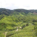 [マレーシア] 紅茶 ボーティーの産地 キャメロンハイランド おすすめ観光スポット