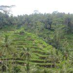 [インドネシア] テガラランにある美しいライステラス(棚田)を散策