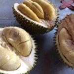 果物の王様 ドリアンの特徴と栄養 マレーシア産最高級 ムサンキングの味は?
